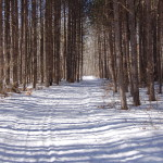 Photo Gallery Friday: Winter at Deerfield Nature Park in Mount Pleasant, Michigan