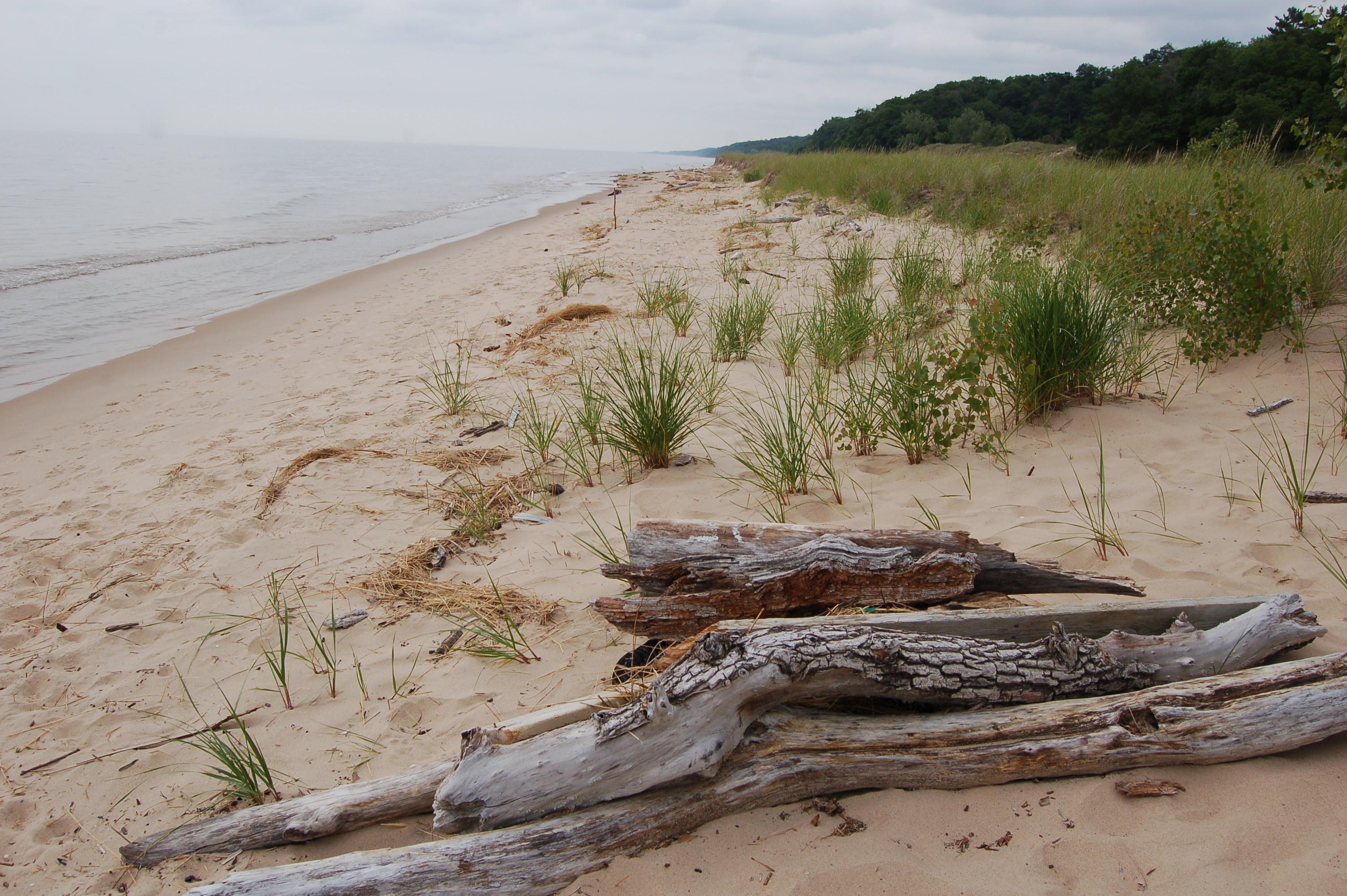 North Ottawa Dunes Lake Michigan
