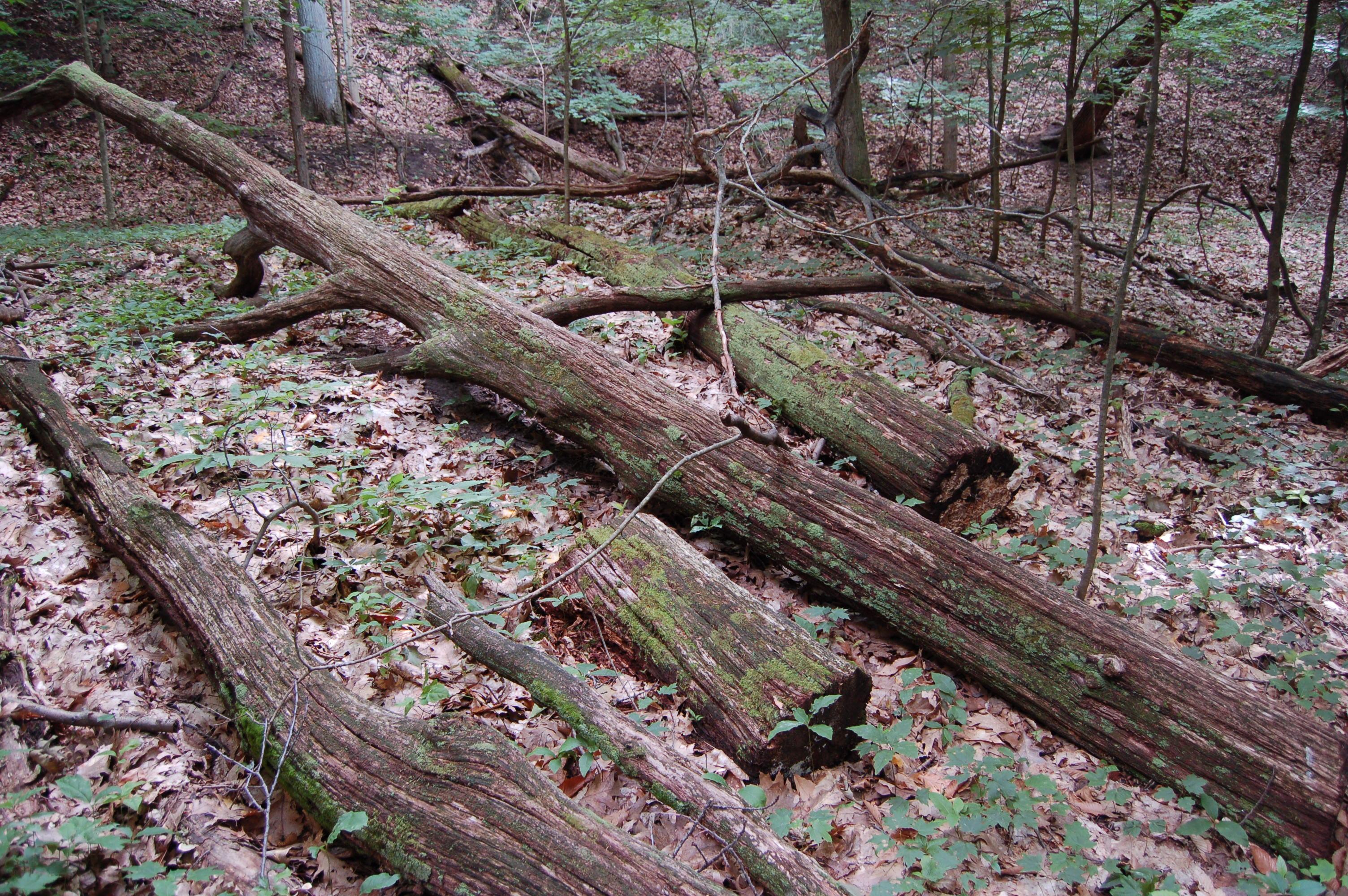 North Ottawa Dunes Woodland Trail