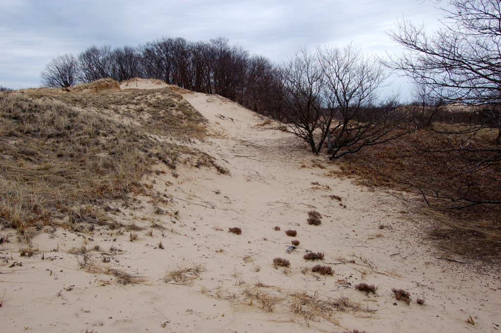 Muskegon Michigan State Park Dunes Trail