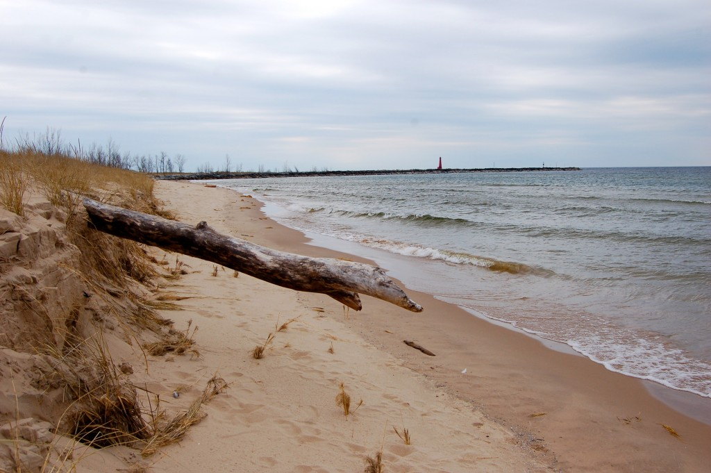 Muskegon State Park Beach Driftwood