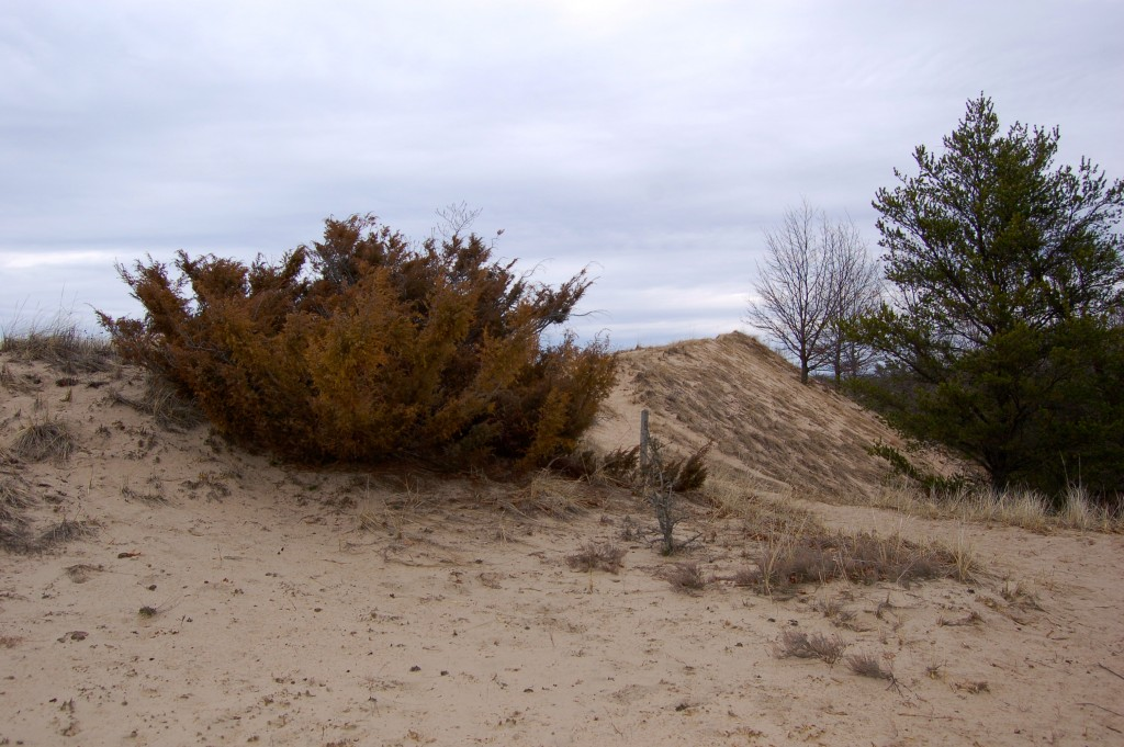 Muskegon State Park Dune Ridge