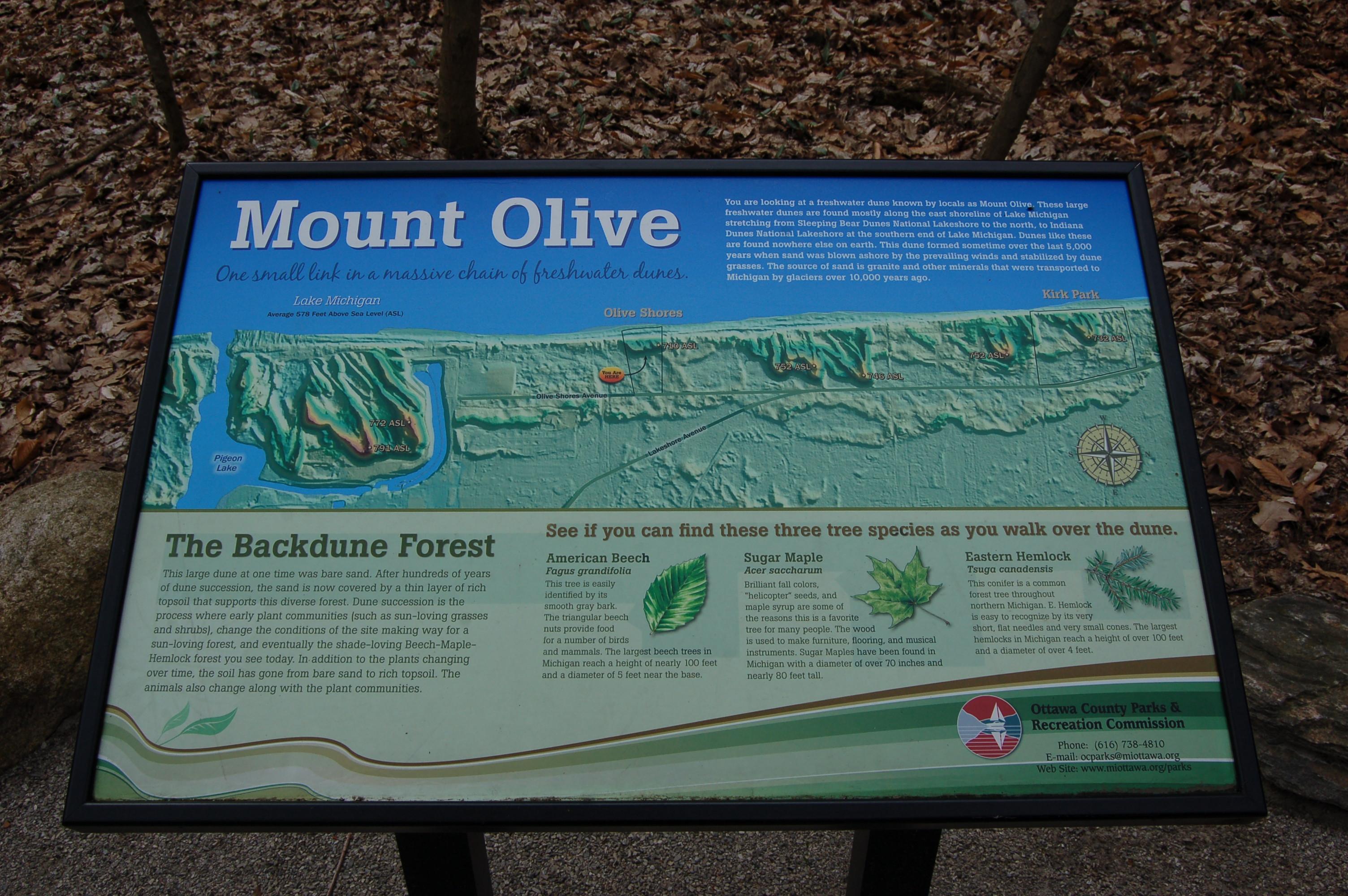 Olive Shores Mt. Olive