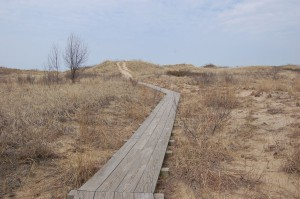 Rosy Mound Beach Trail