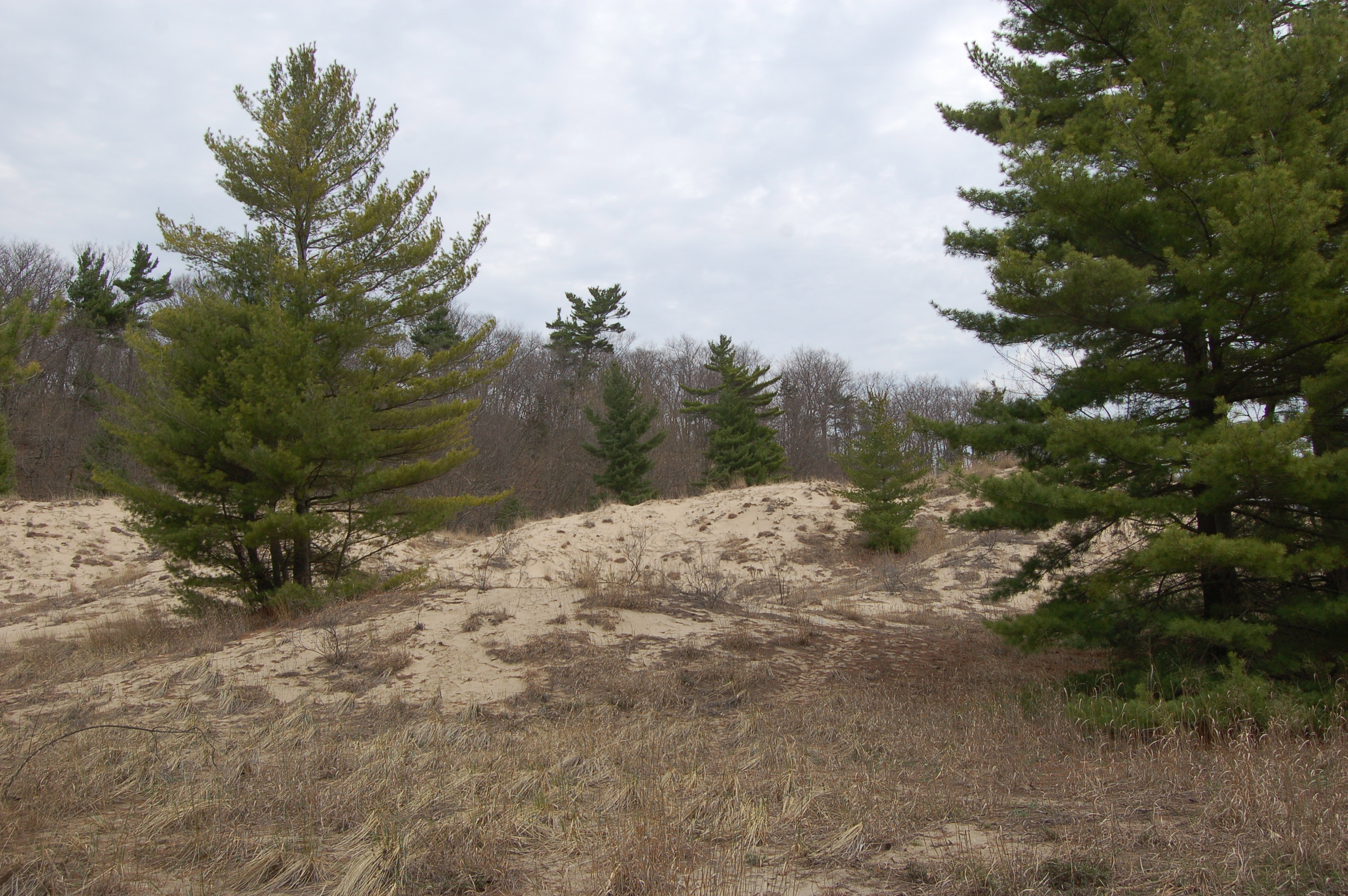 Rosy Mound Dune Forest