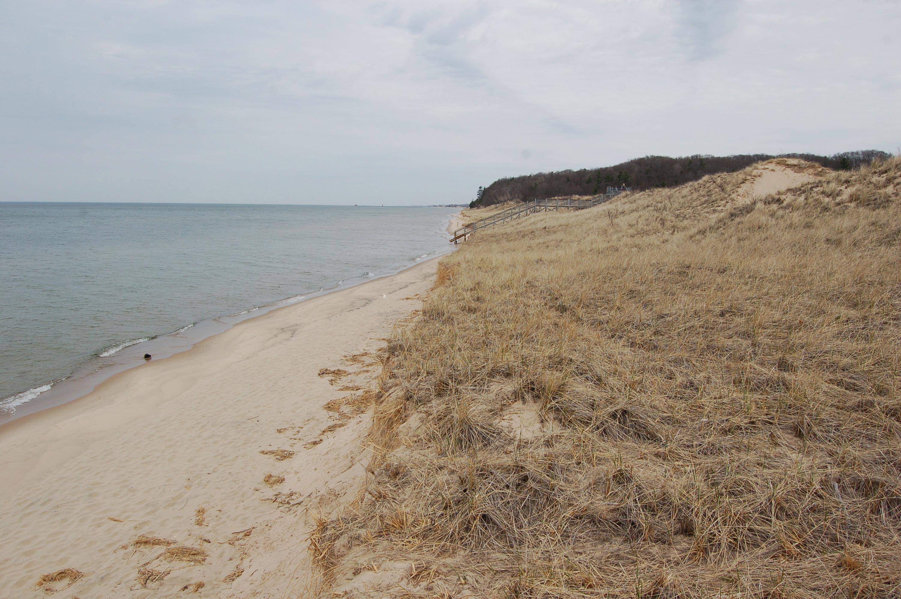 Rosy Mound Dunegrass