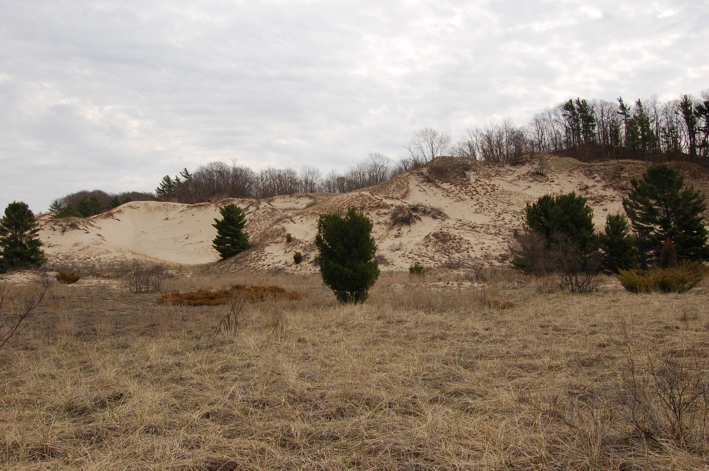 Rosy Mound Dunes 1