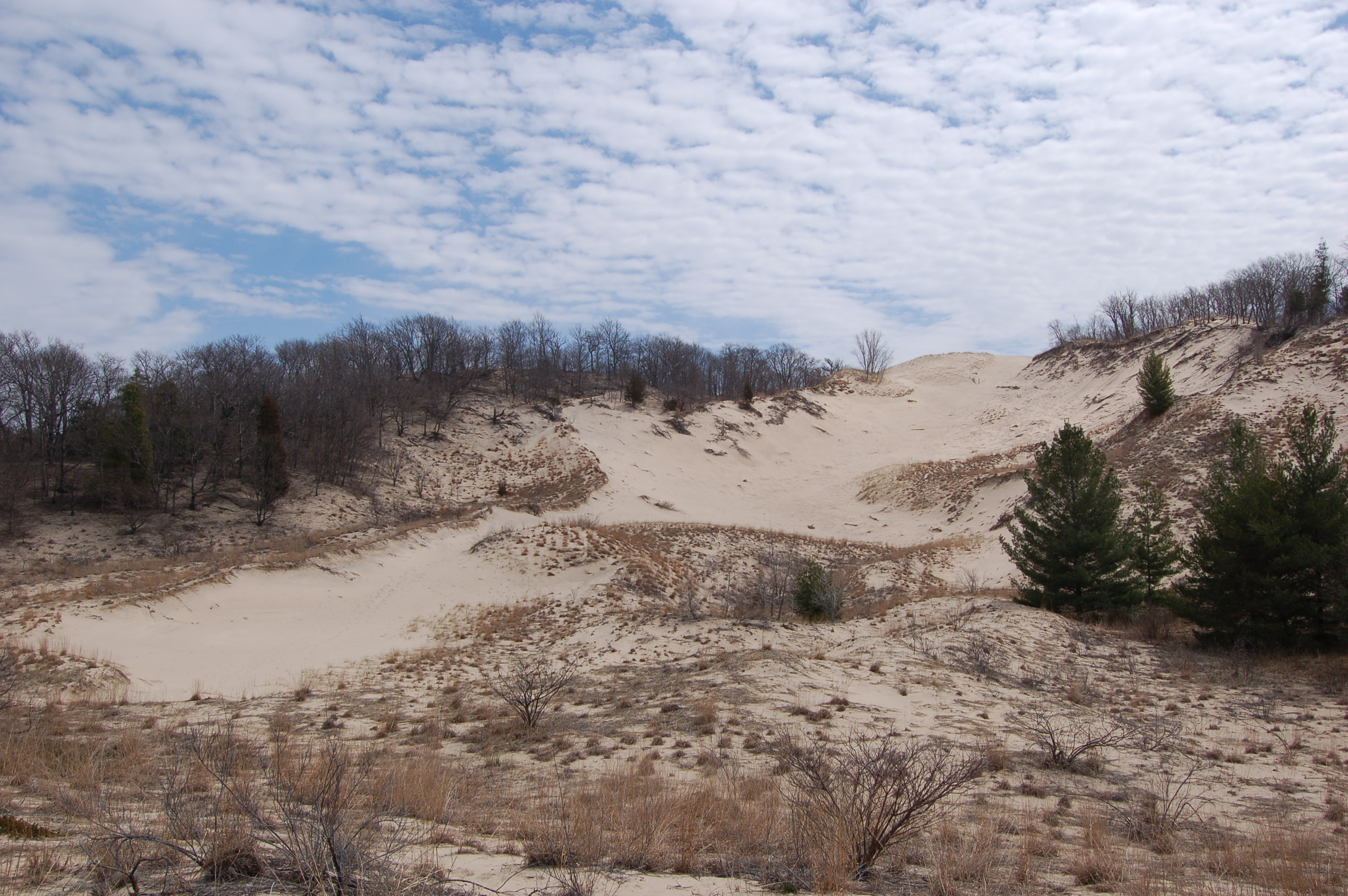 Warren Dunes State Park Cover Photo