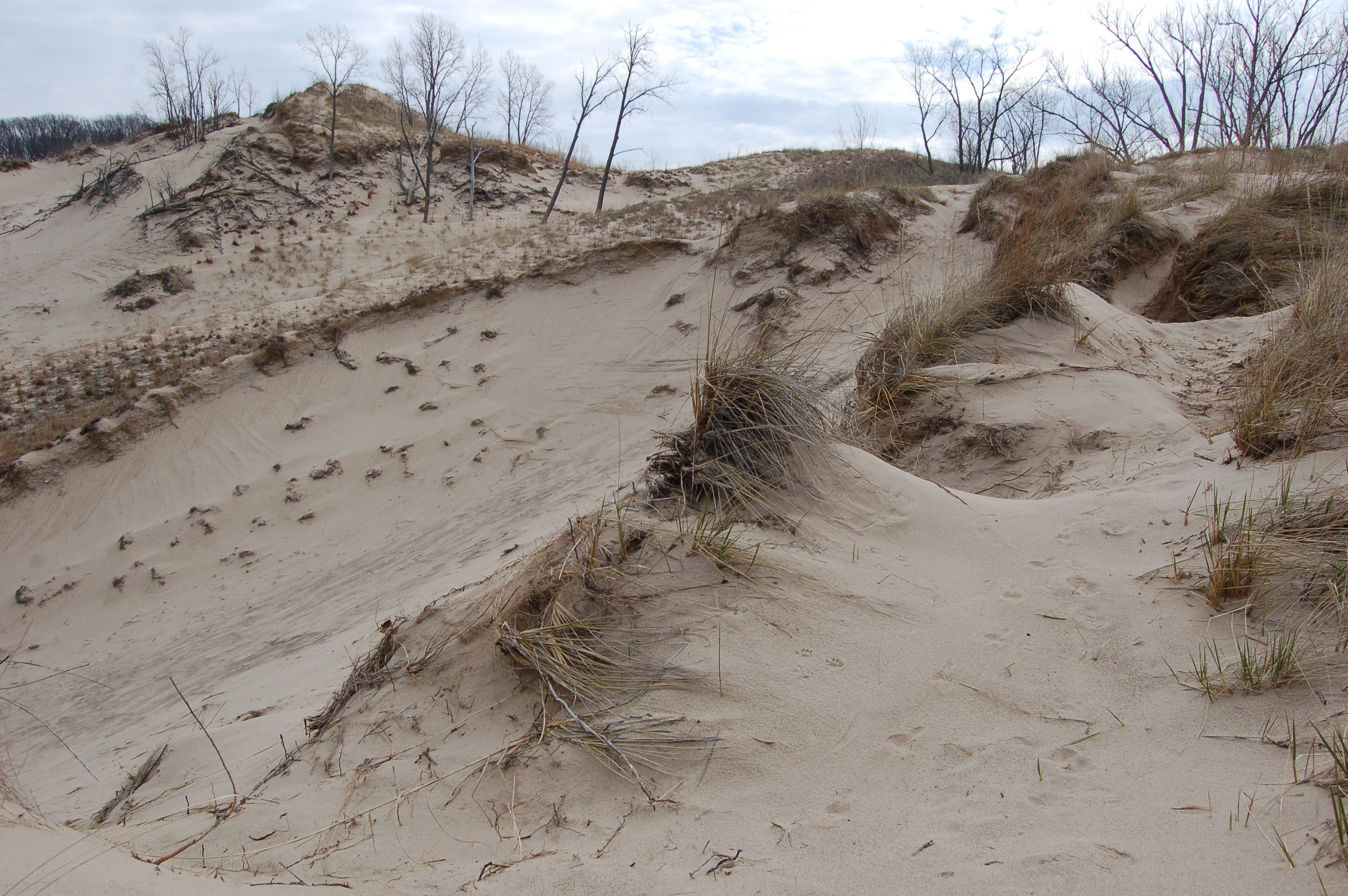 Warren Dunes State Park MI Dunes