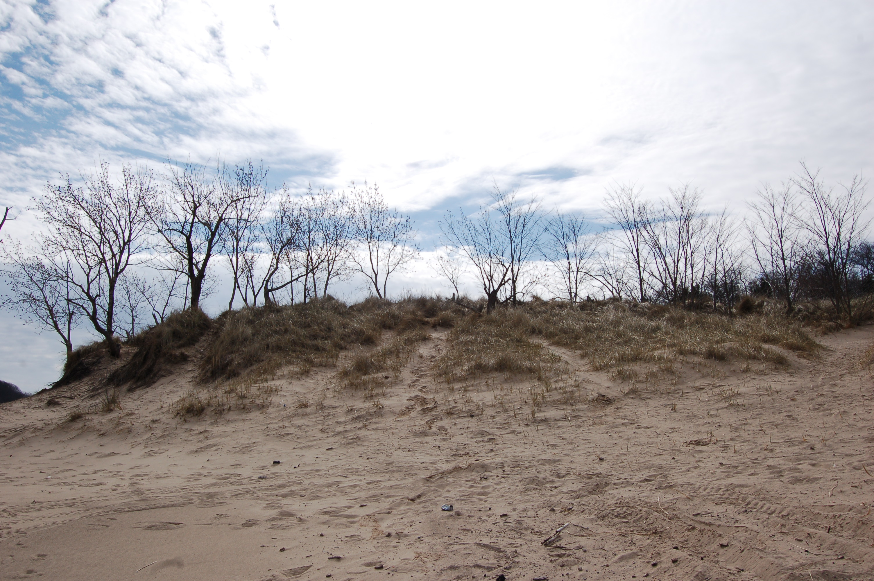 Warren Dunes State Park Michigan 1