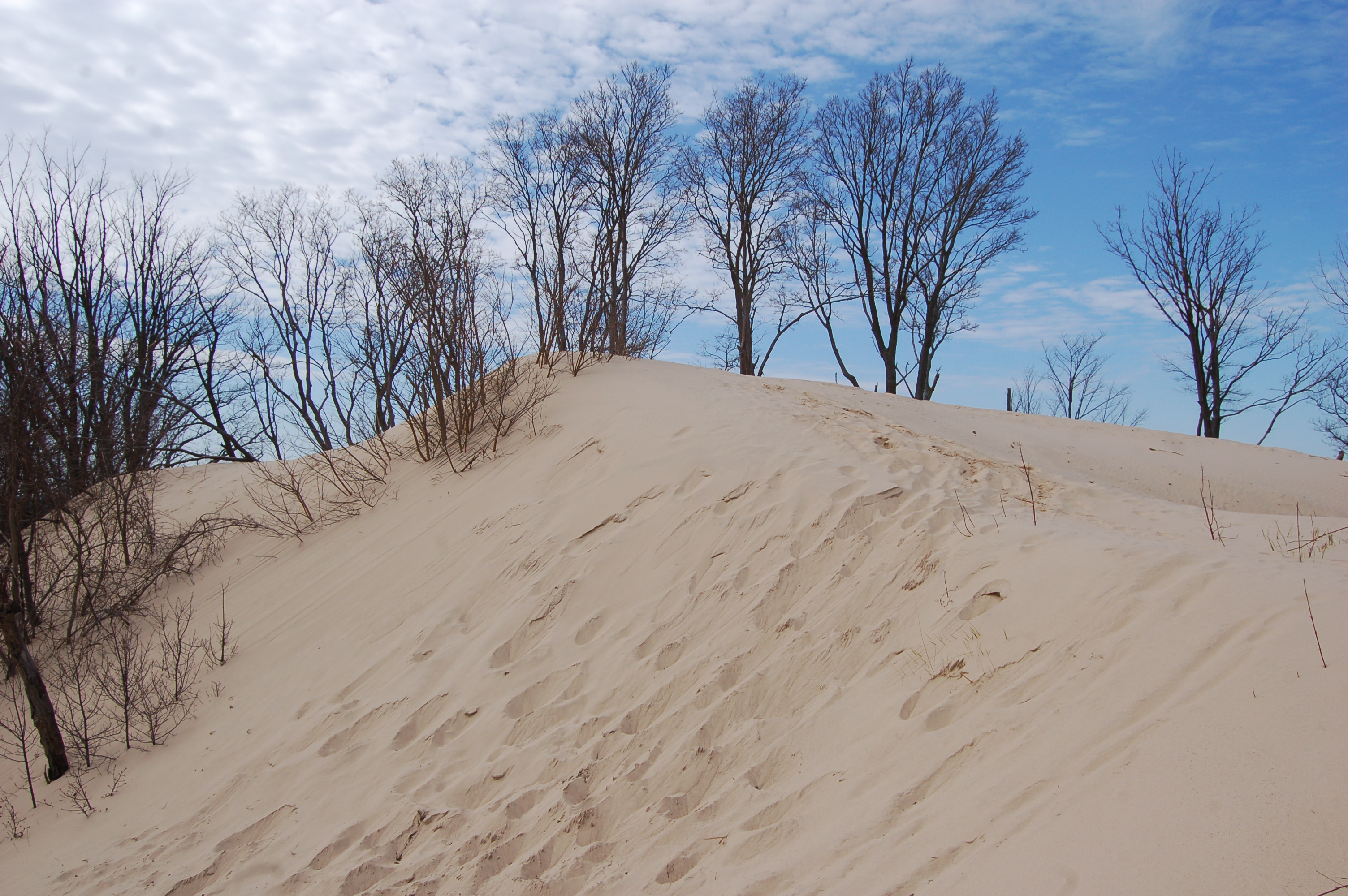 Warren Dunes State Park Sand Clouds Trees