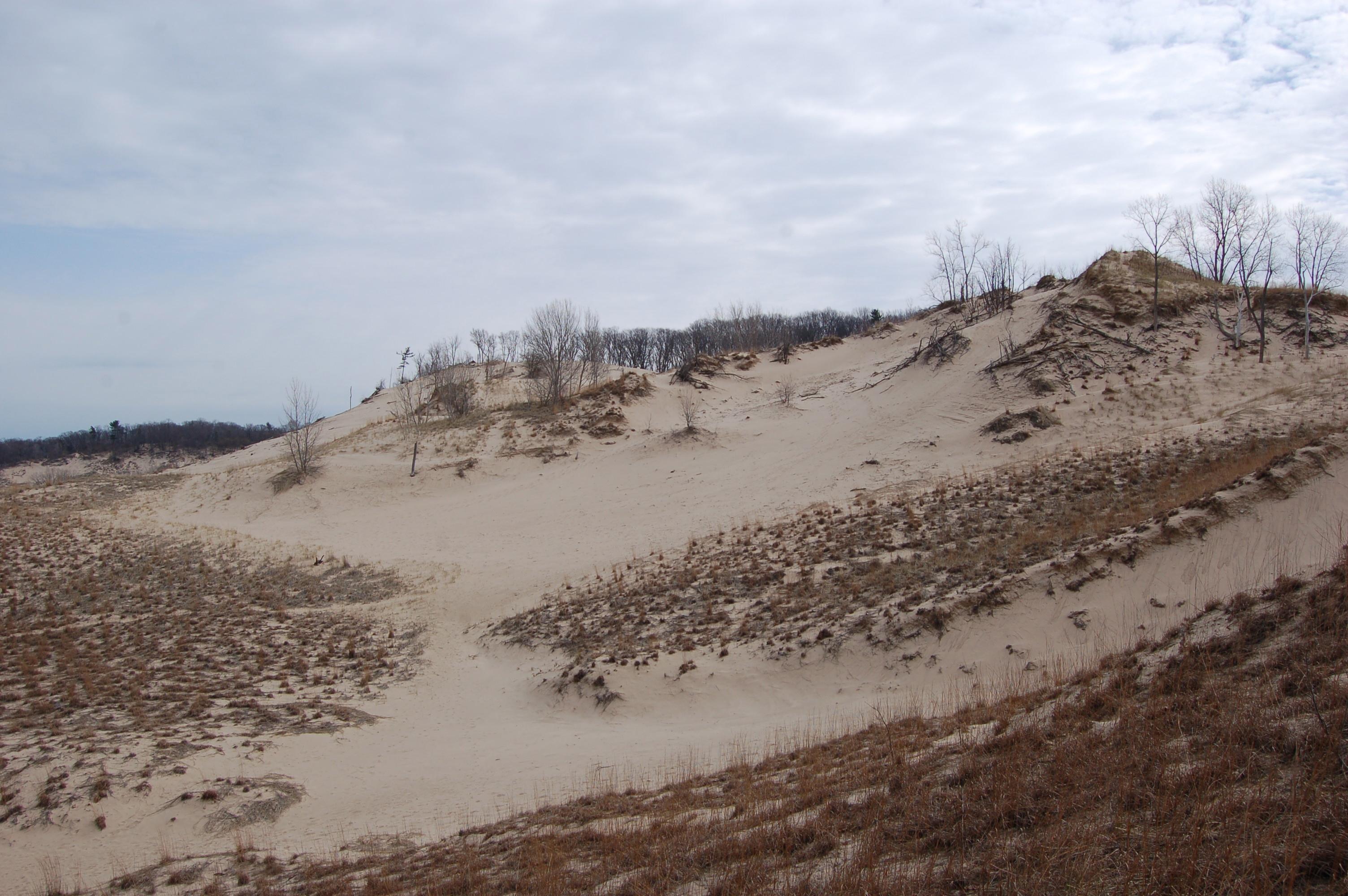 Warren Dunes State Park Sand Dunegrass