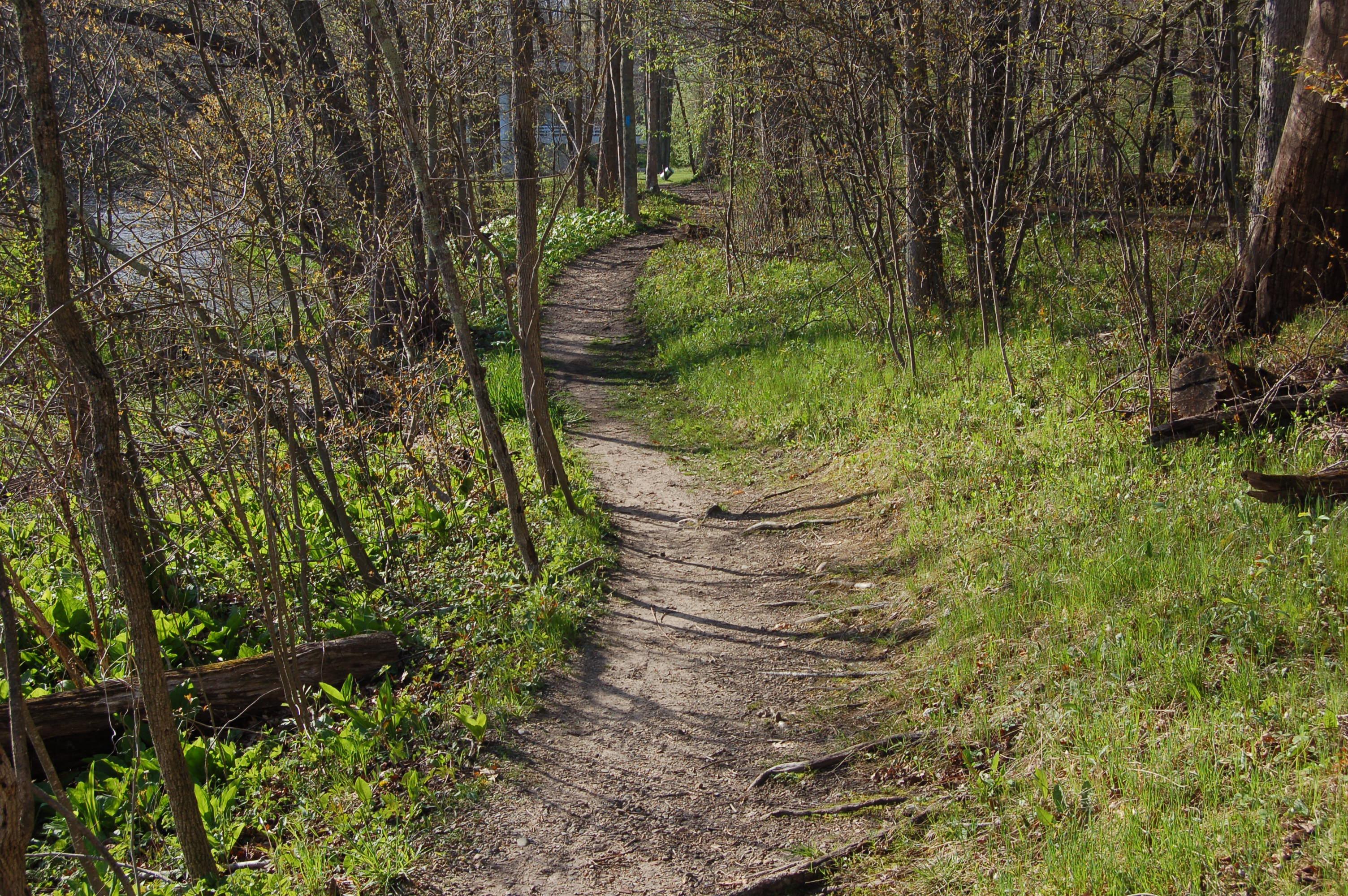 Fallasburg Park North Country Trail MI