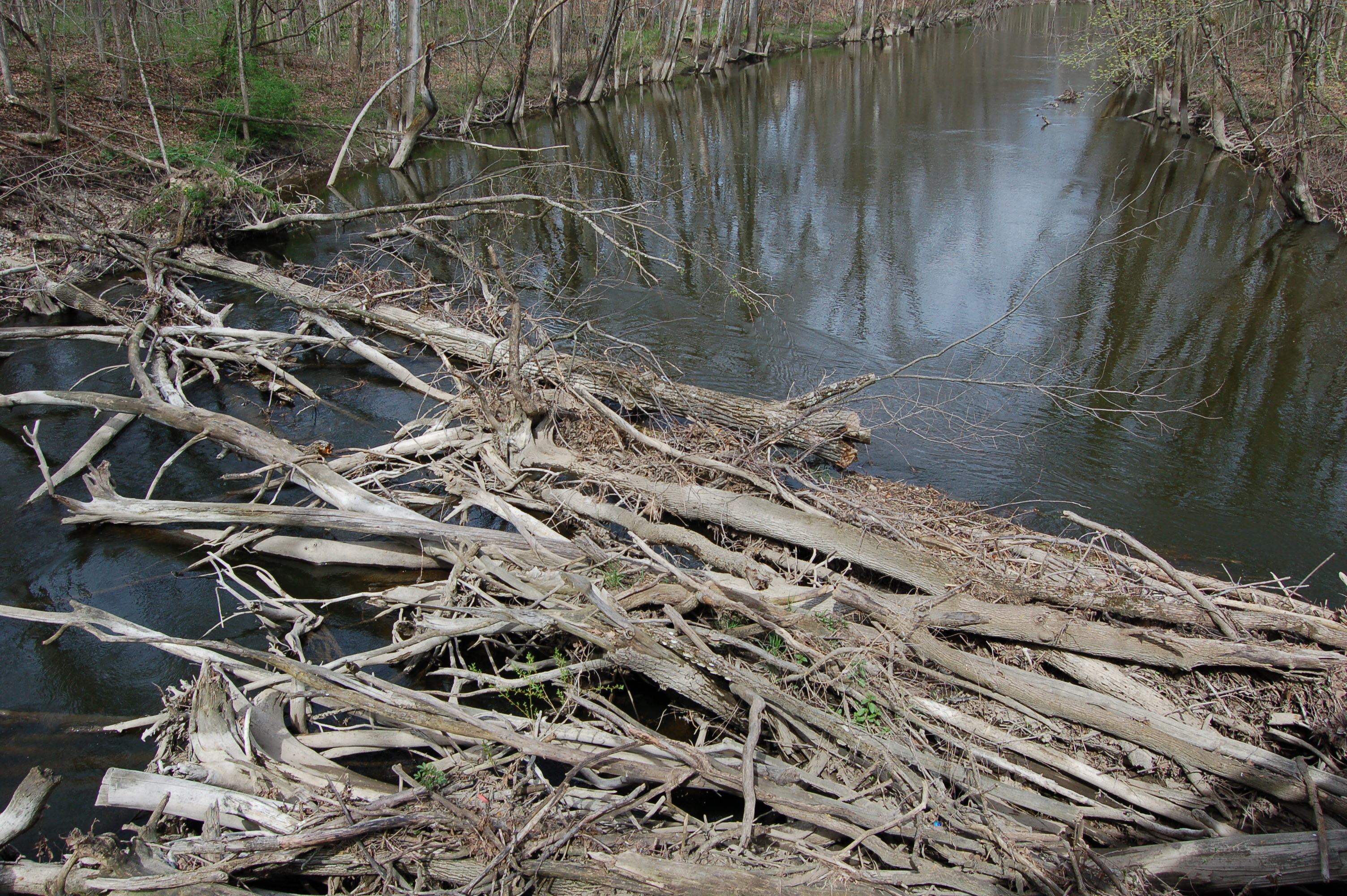 Paul Henry Trail Thornapple Logjam