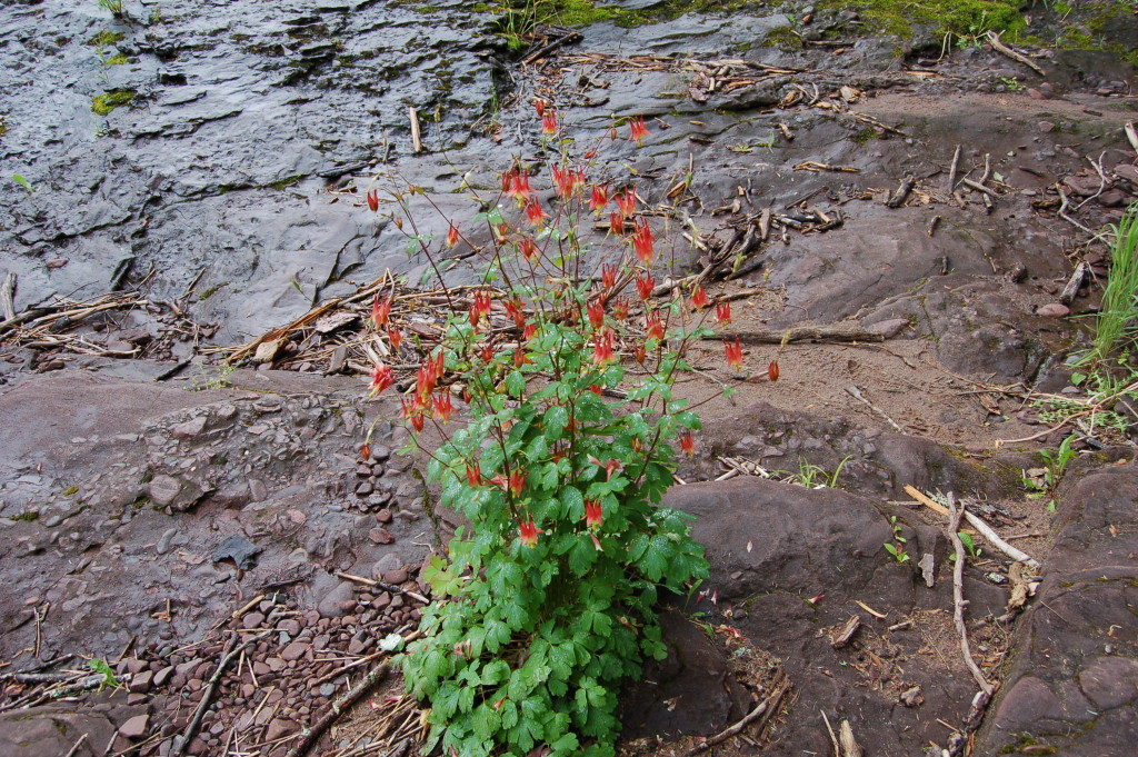 Black River Scenic Byway Sandstone Falls Flower