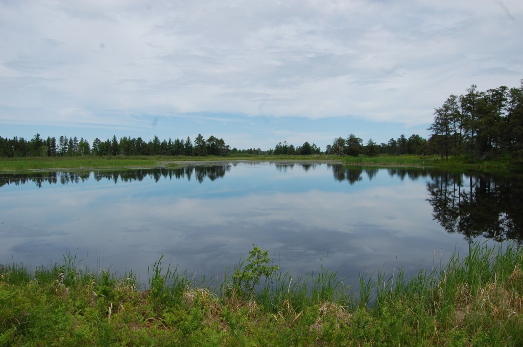 Seney National Wildlife Refuge Cloud Reflections