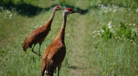Photo Gallery Friday: Seney National Wildlife Refuge