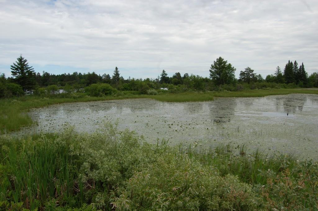 Seney National Wildlife Refuge Observation Pond