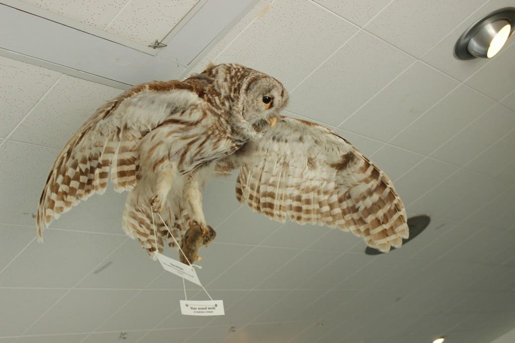 Seney National Wildlife Refuge Owl Exhibit