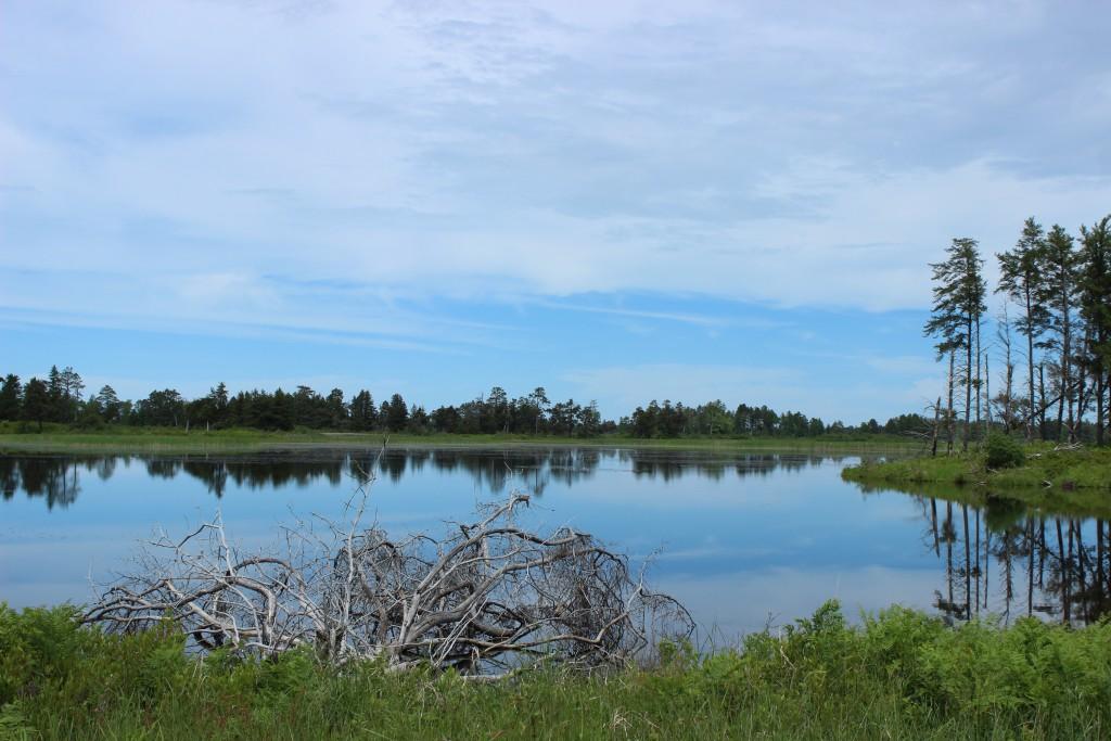 Seney National Wildlife Refuge Reflections Marshland Drive
