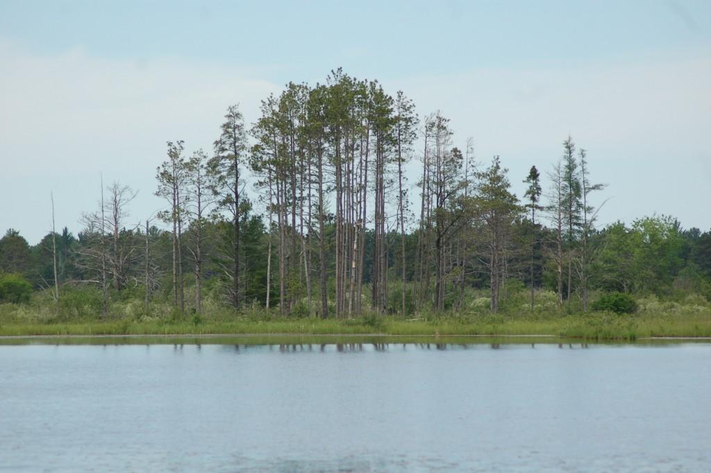 Seney National Wildlife Refuge Trees Pond Marshland Michigan