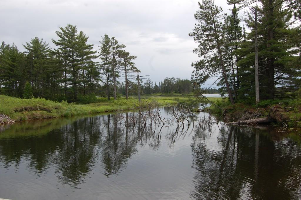Seney National Wildlife Refuge Trees Reflect Marshland