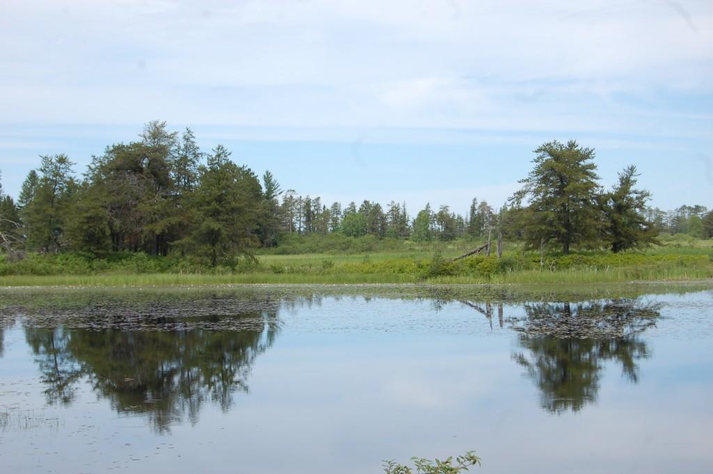 Seney National Wildlife Refuge Trees Reflecting 2