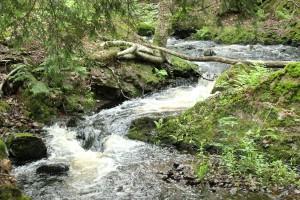 Wyandotte Falls upstream