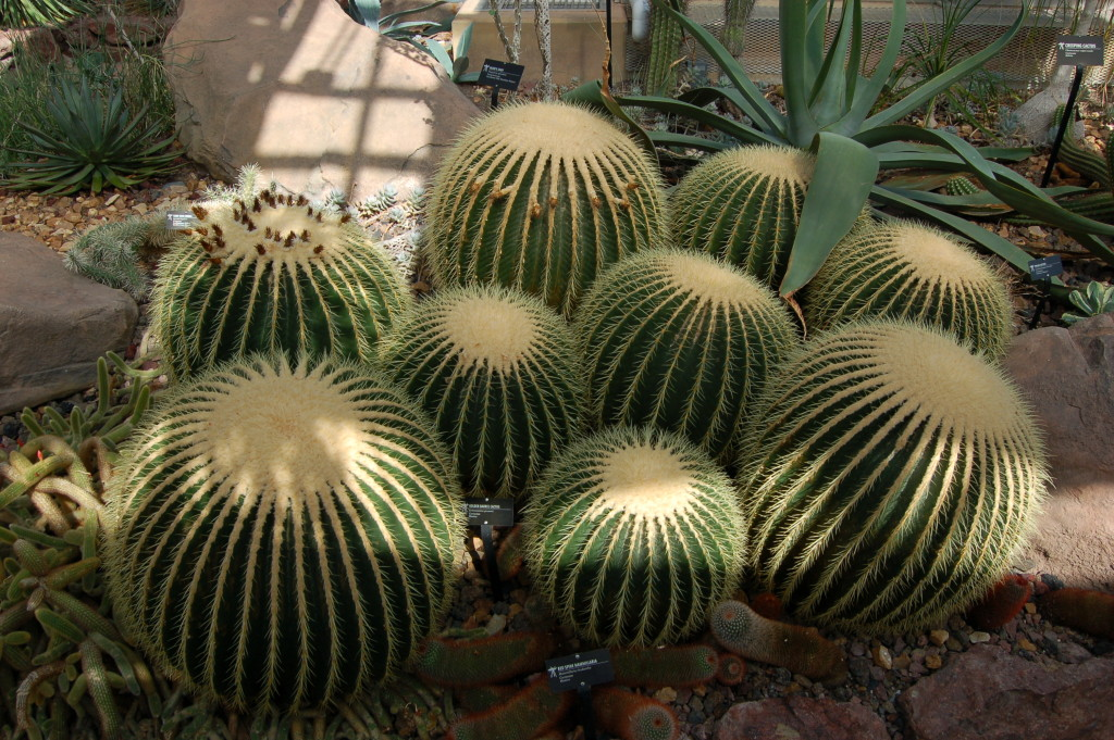 Frederik Meijer Gardens Cacti Cactus