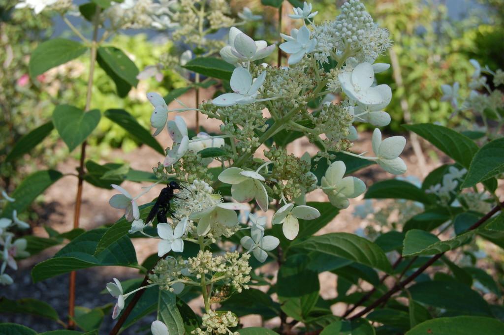 Frederik Meijer Gardens Flowers Japanese Garden