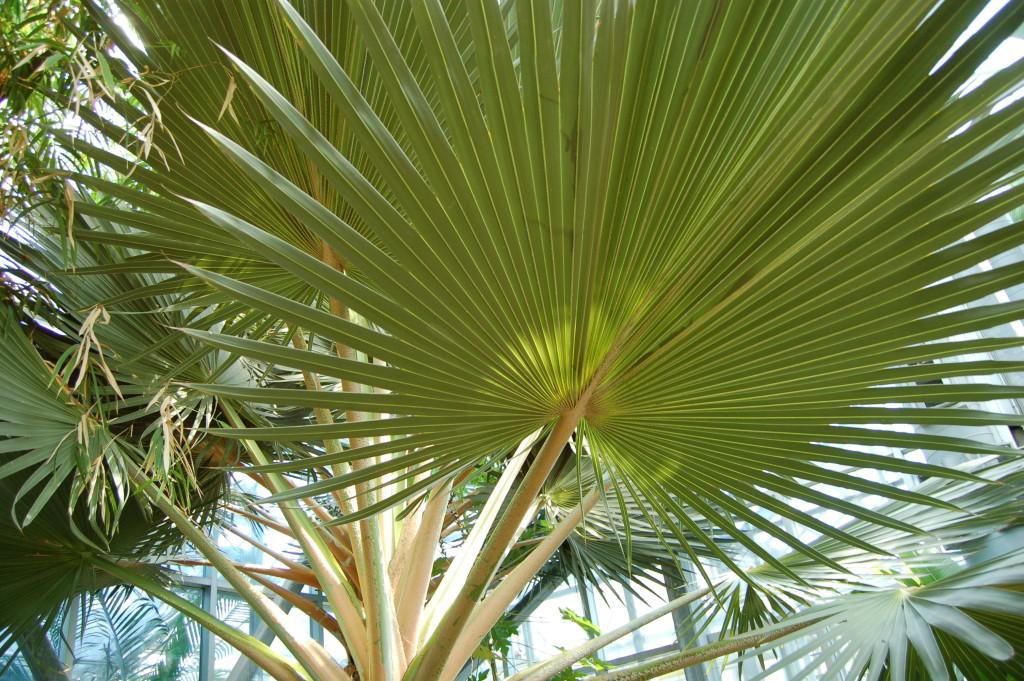 Frederik Meijer Gardens Palm Tree