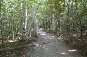 Pyramid Point Birch Trees