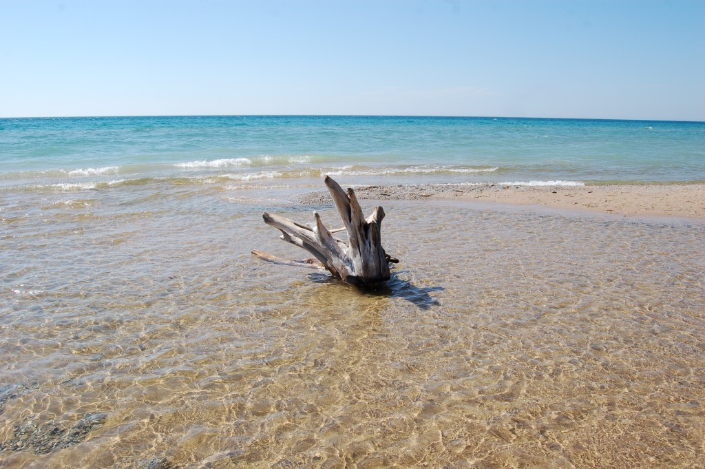 Sleeping Bear Dunes Esch Beach Driftwood