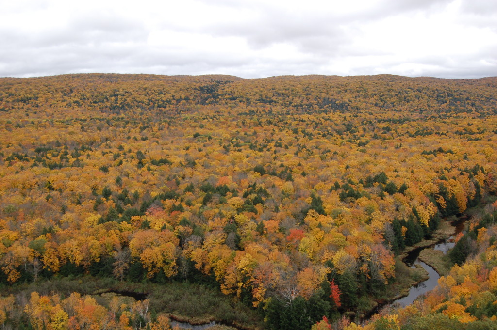 Carp River Valley Porkies Mi Fall Color