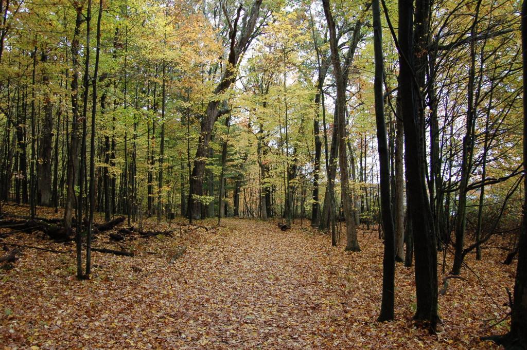 Fall Color Hiking Trail Pickerel Lake Park