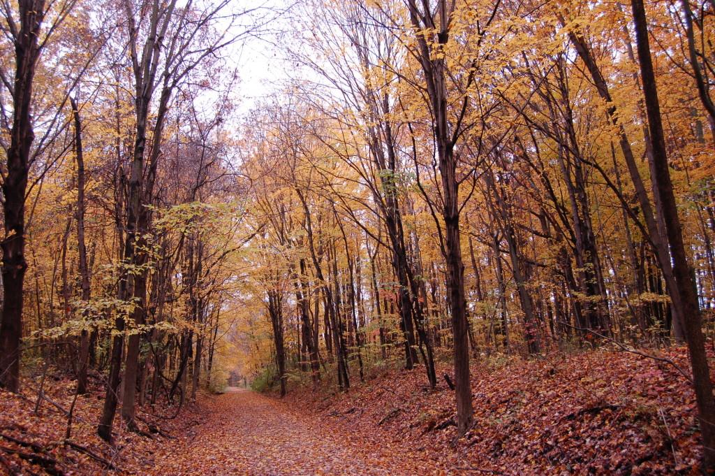 Fall Color Kala Haven Trail Autumn MI