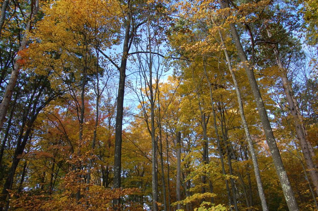 Fall Color Michigan 2016