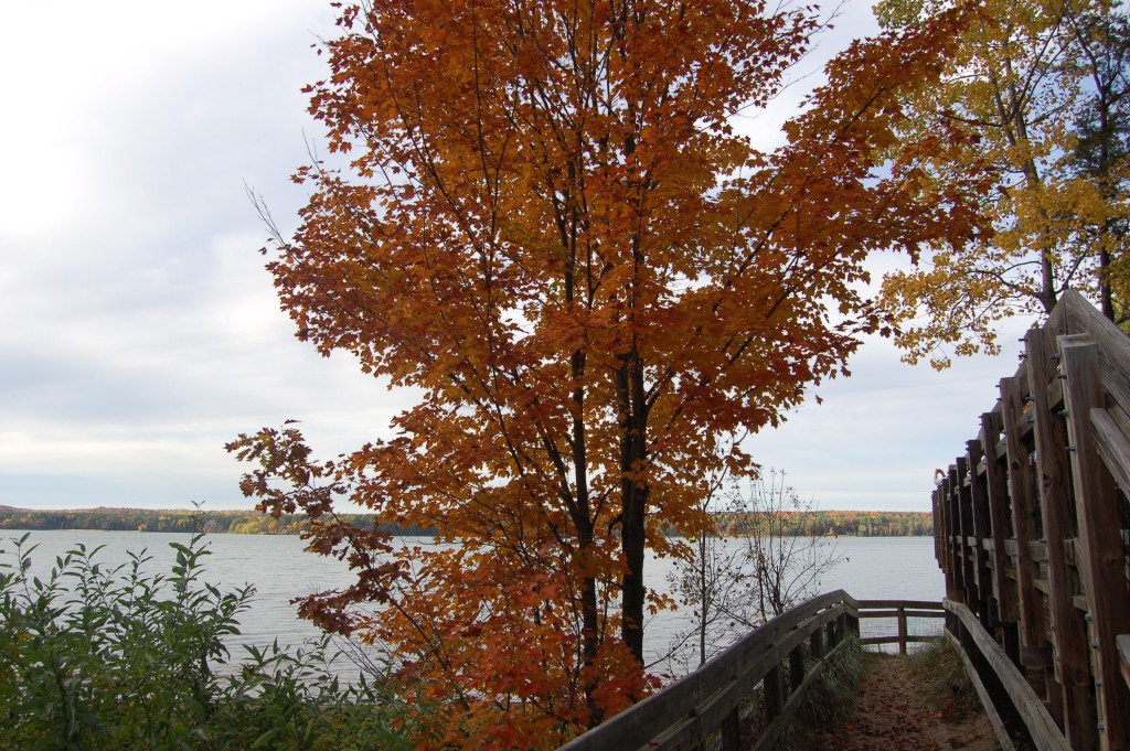 Fall Color Michigan Mesick Rest Area