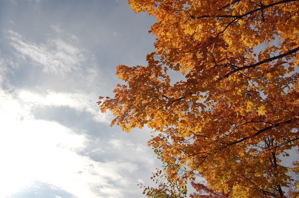 Fall Color Michigan Scenic Trees