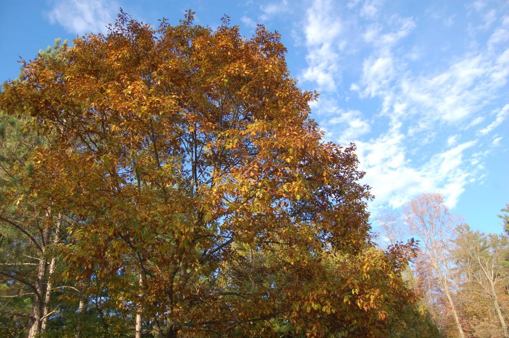 Fall Color Pine River Michigan