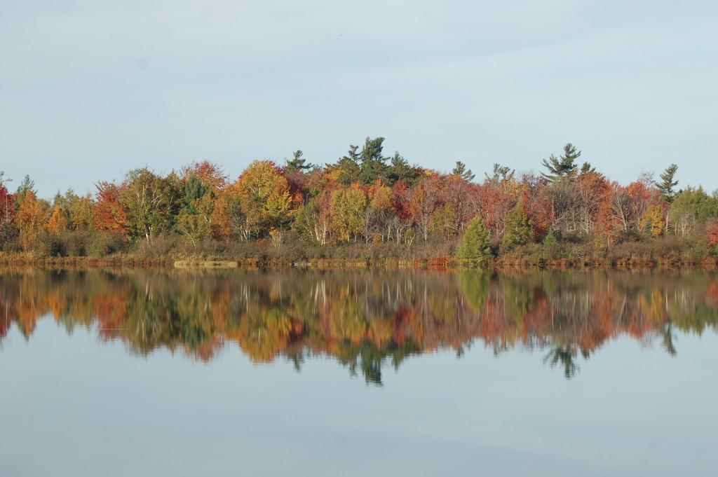 Fall Color Reflection Loon Lake MI