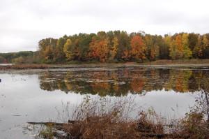 Fall Color Reflection Pickerel Lake MI