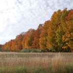 Photo Gallery Friday: 2016 Michigan Fall Color, Lower Peninsula