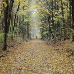 The Best Michigan State Parks for Fall Color