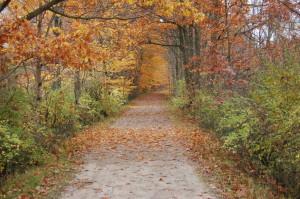 Kal Haven Trail MI Autumn