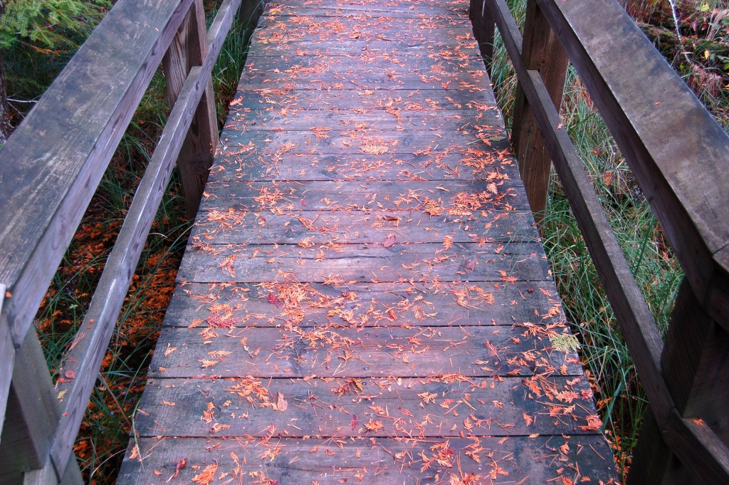 Marsh Trail Boardwalk Fall Color