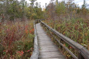 Sand Point Marsh Trail Feature Photo