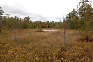 Sand Point Marsh Trail Wetlands