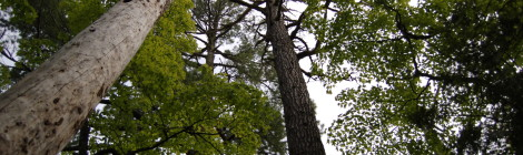 Michigan Trail Tuesday: Estivant Pines Nature Sanctuary, Copper Harbor
