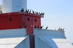 Mackinac Island Crib Light Cormorants